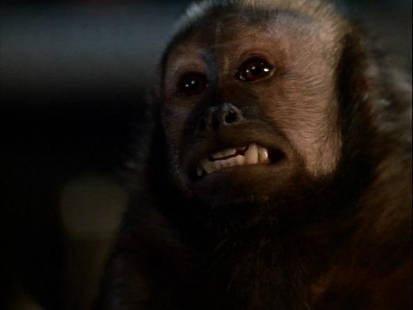 monkeyshines3